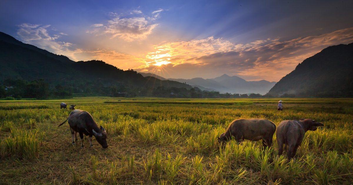 Gambar oleh Quang Nguyen vinh dari Pixabay