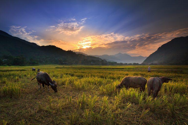 Nagari, Hak Ulayat dan Keadilan Agraria