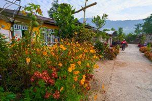 Bunga ditanam dipinggir jalan kampung Jorong Tabek, Nagari Talang Babungo