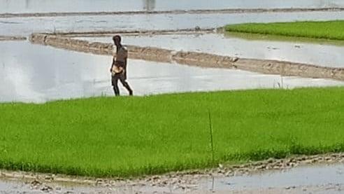 Petani melihat bibit yang akan ditanam